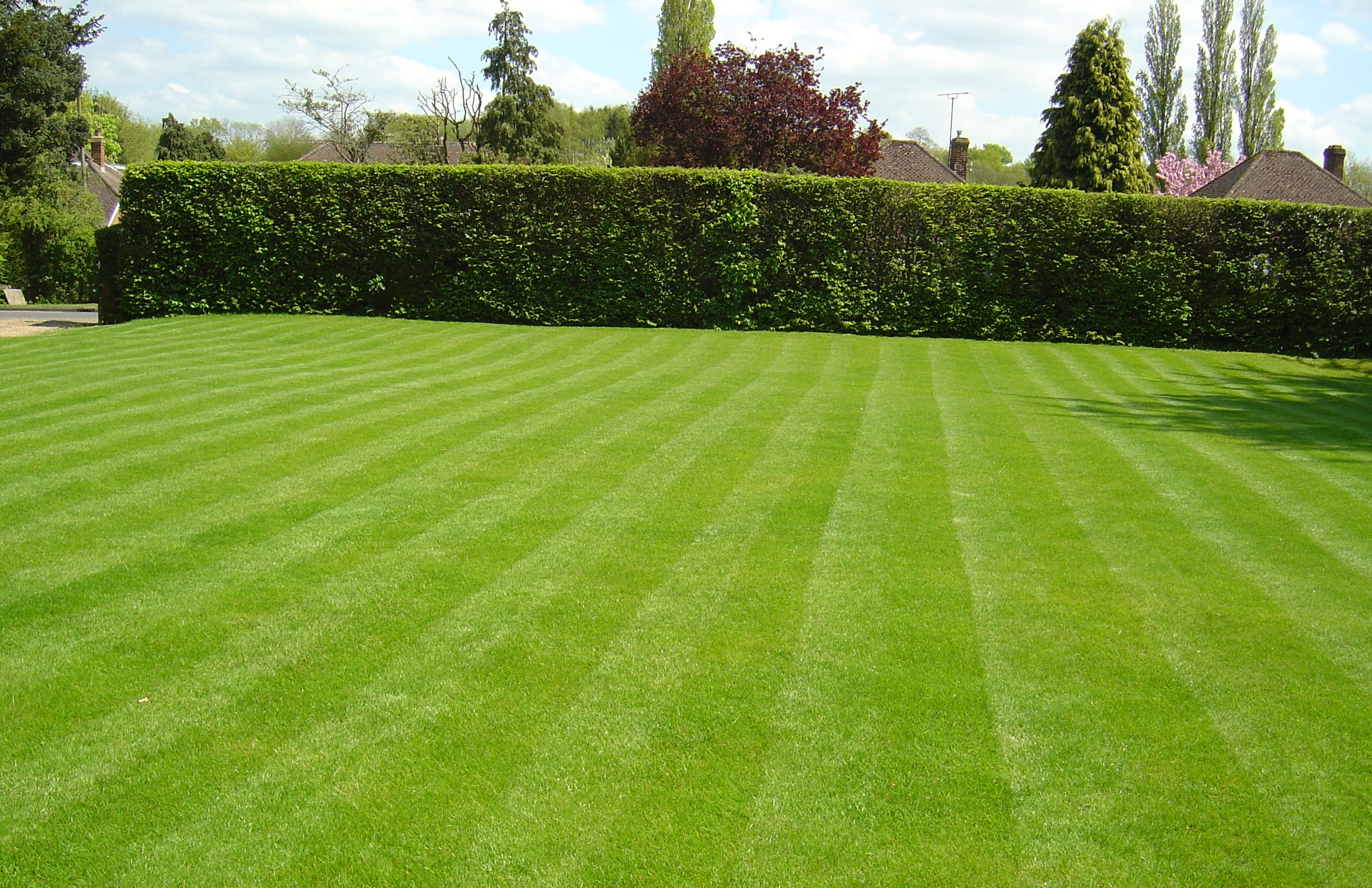 Image gallery lawn for Best garden maintenance